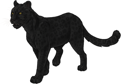 Png images of black panther cats. Lioden wiki quests and
