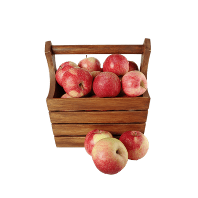 Png images of branches with apples. On a branch vintage