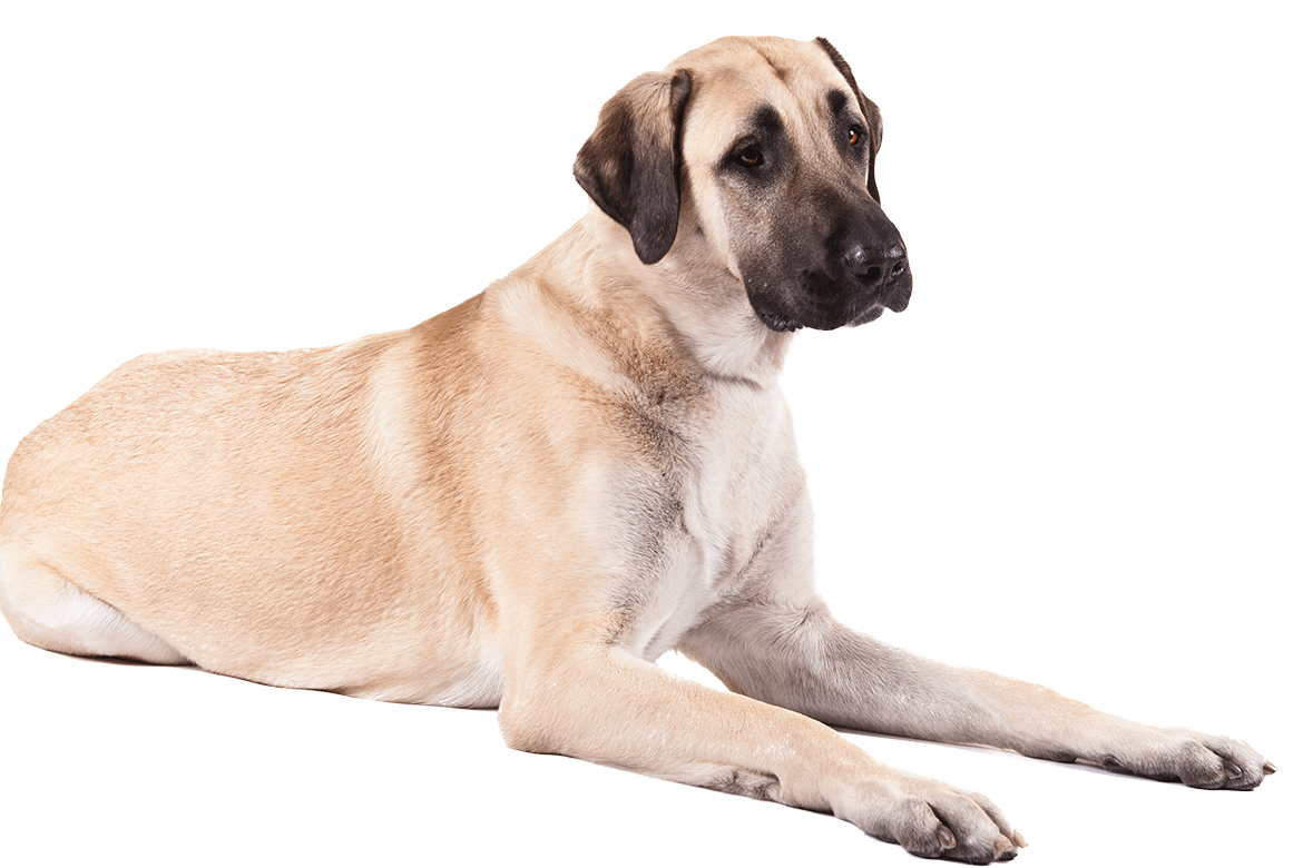 Dog . Dogs png clip art free