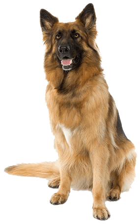 Png dog. Hd images of dogs