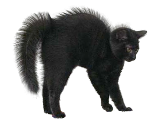 Png images of halloween cats. Black cat by lg