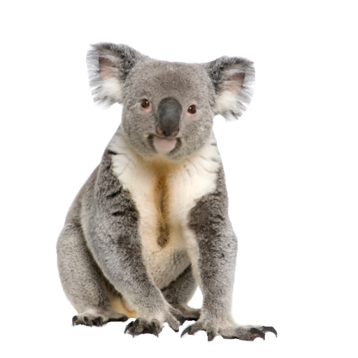 Png images of koala bear. Hd transparent pluspng
