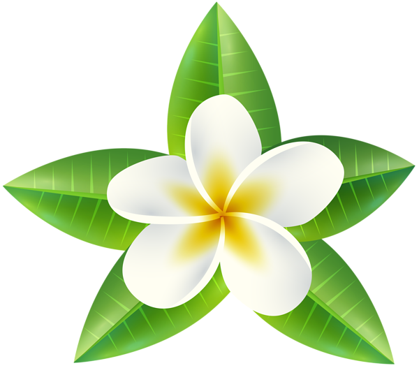 Png images of tropical flower vines