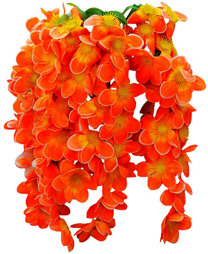 Png images of tropical flower vines. Vine by jeanicebartzen on