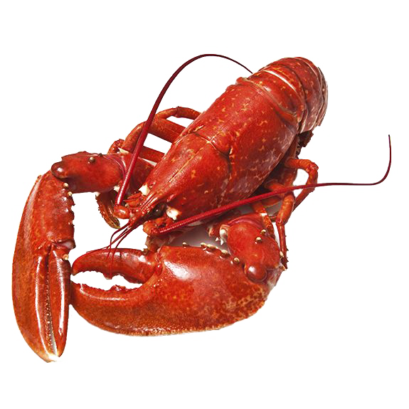 Png lobster. Download free photos dlpng