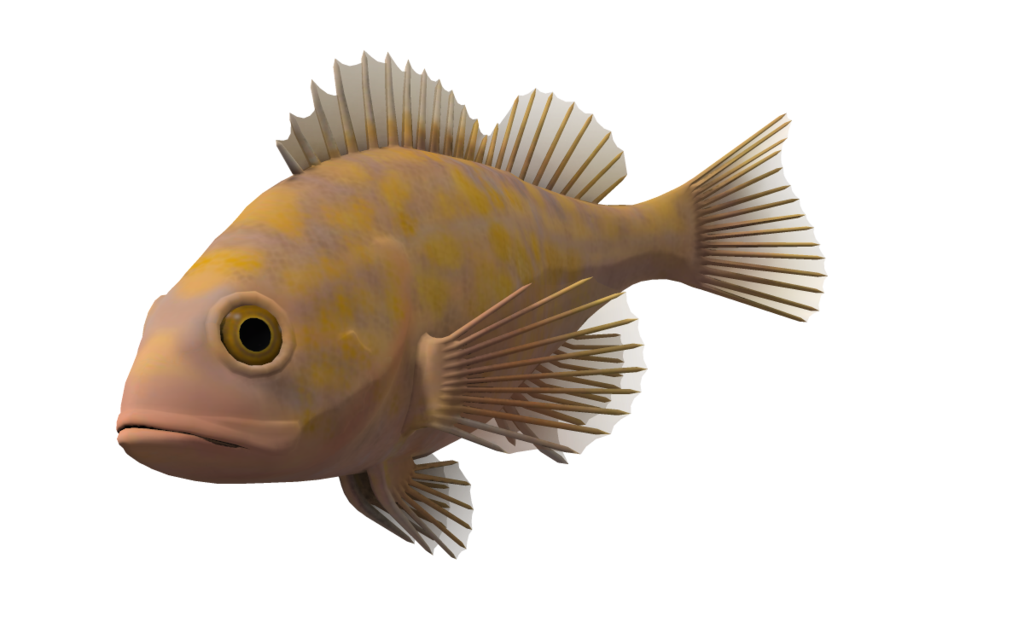 Ocean fish png. Fishing transparent pictures free