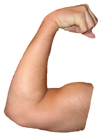 Chin ups vs pull. Png muscle arms svg library library
