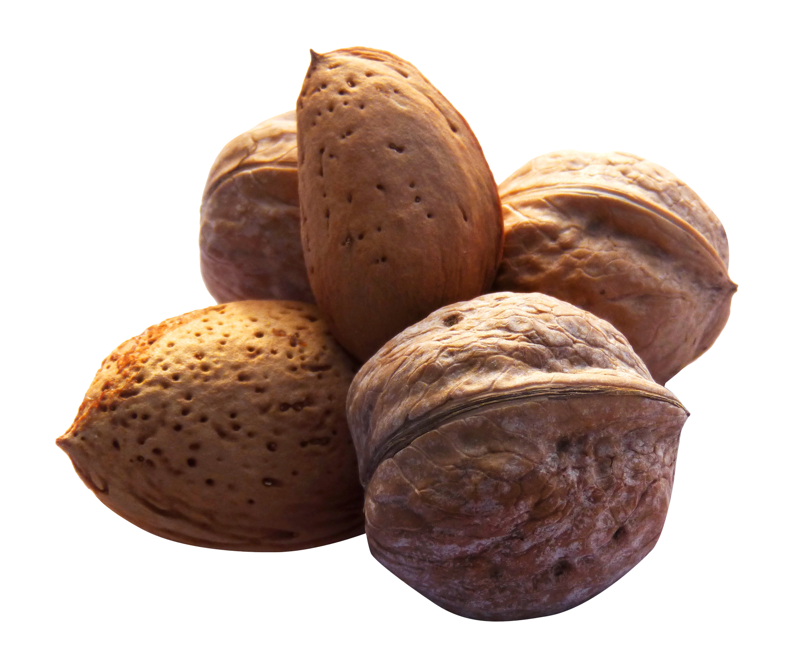 Png nuts. Image purepng free transparent