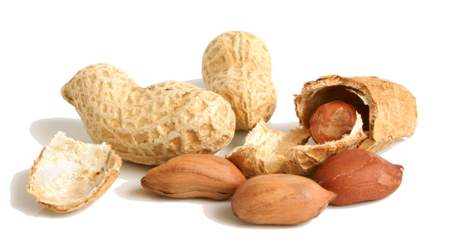 Transparent peanut file. Png images all