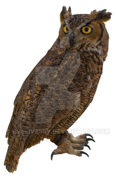 Png owl. By evelivesey on deviantart