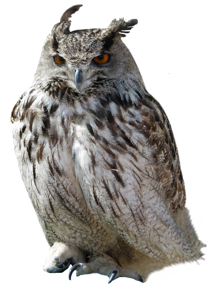 Png owl. Owls images free download