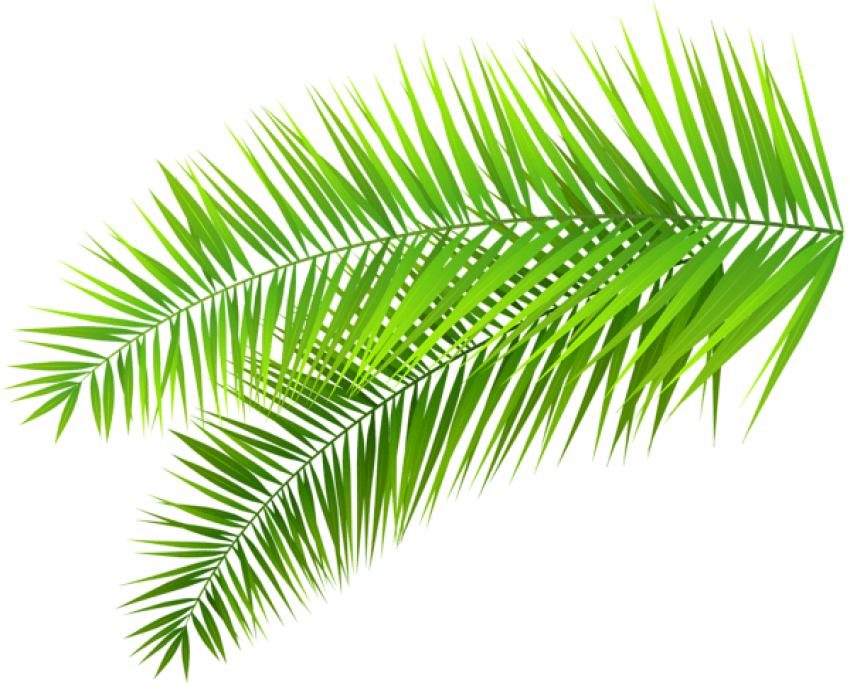 Download leaves decoration clipart. Palm leaf transparent png jpg library download