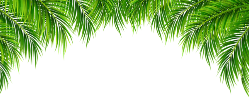Png palm leaf. Download leaves decor clipart