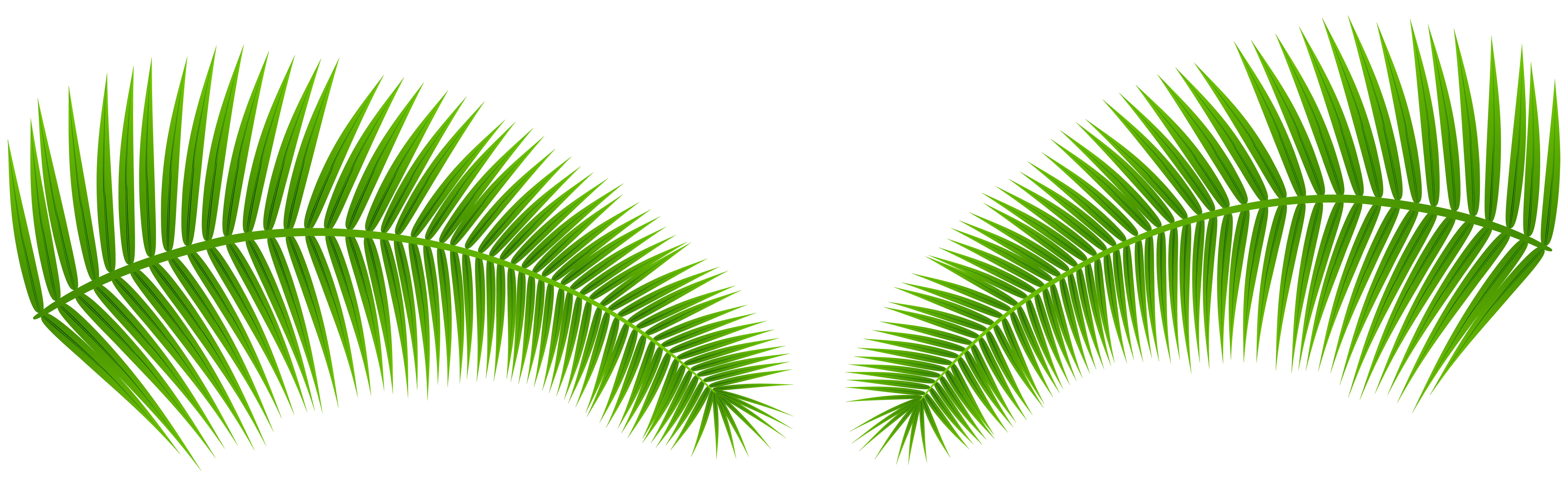 Leaves clip art image. Palm leaf transparent png image transparent stock