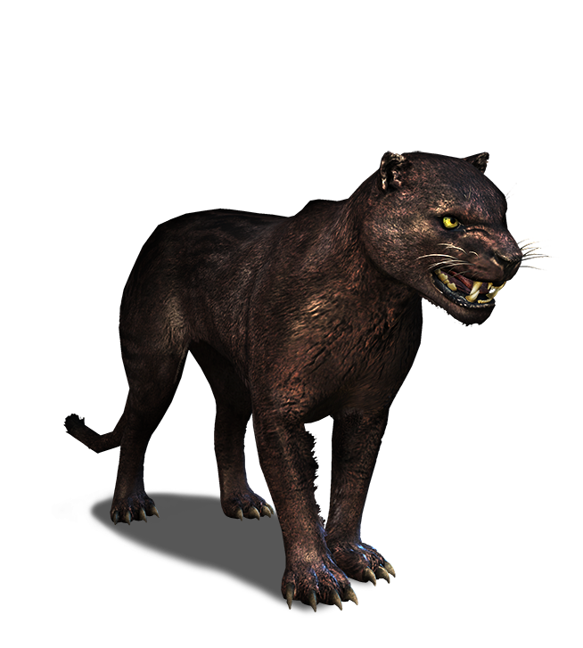 Png panther. Image tw journal witcher