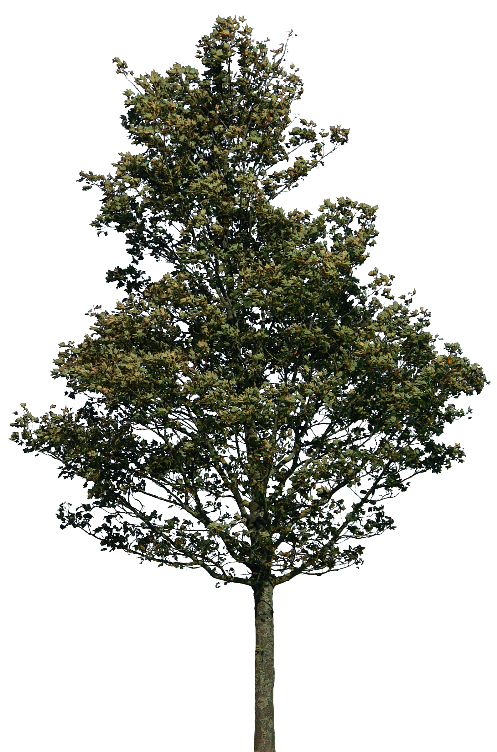Png para photoshop. Tree by gd d