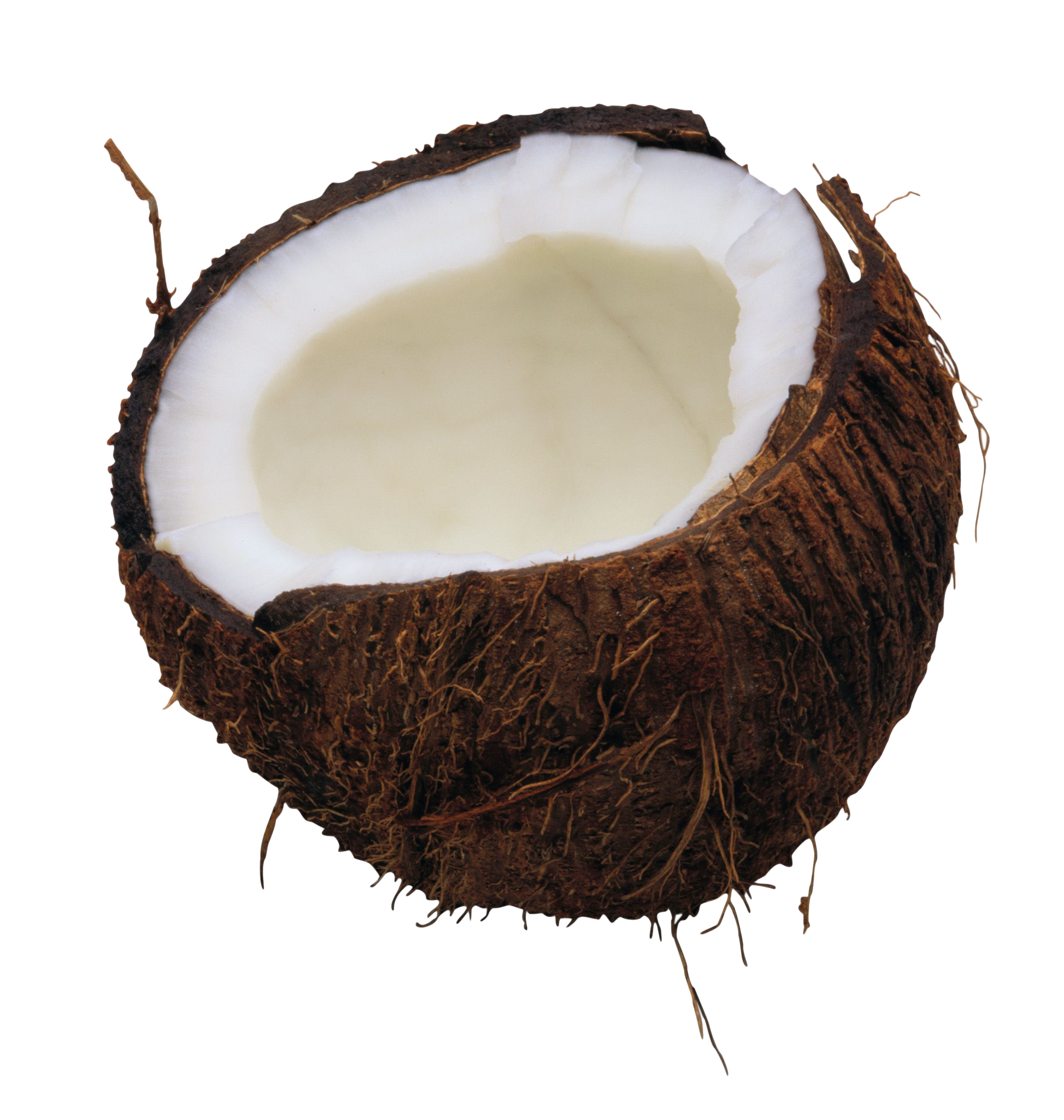 Png photo. Coconut image purepng free