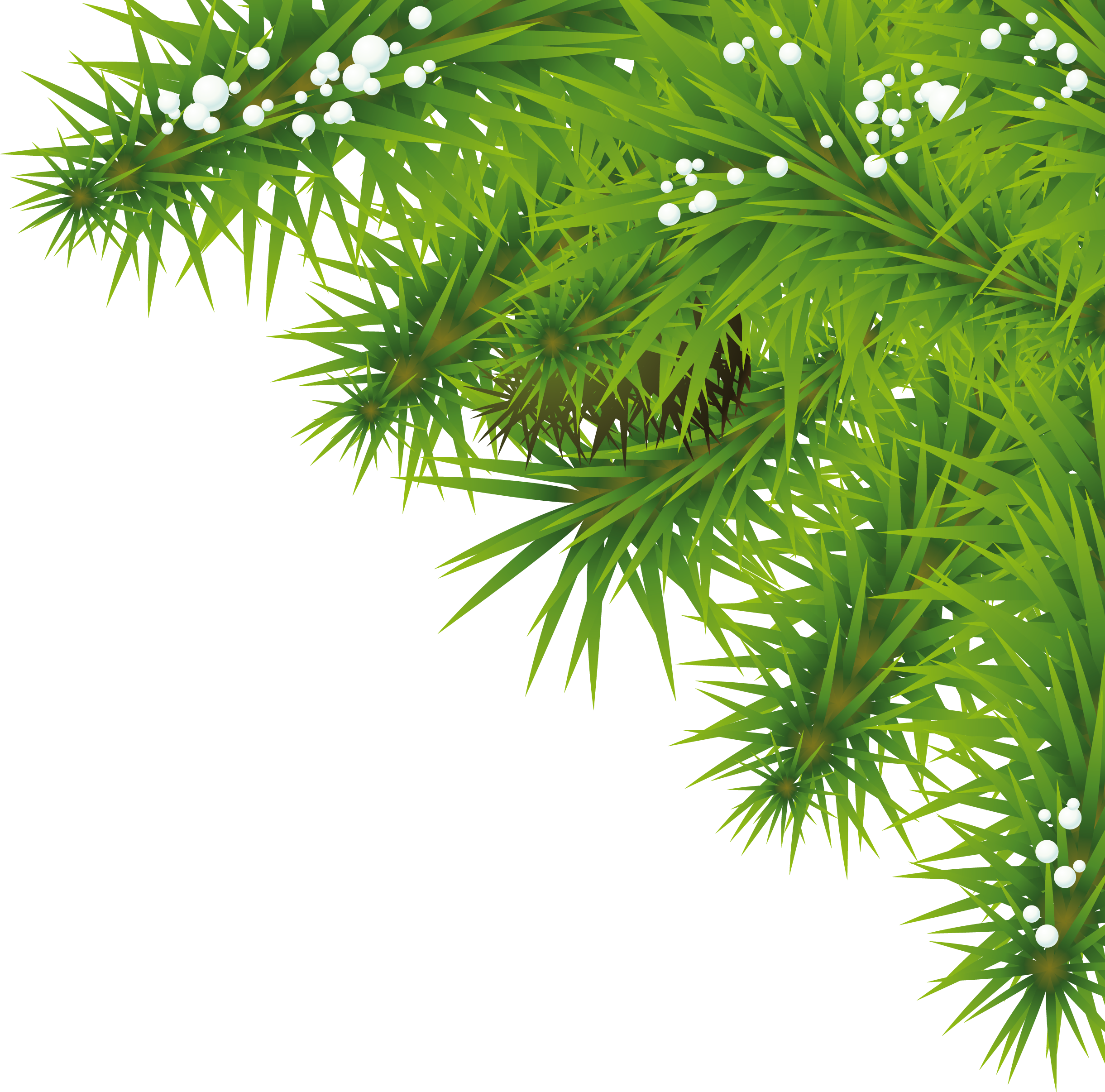 fir branch png