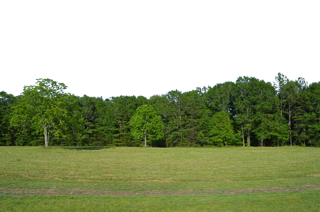 forest background png