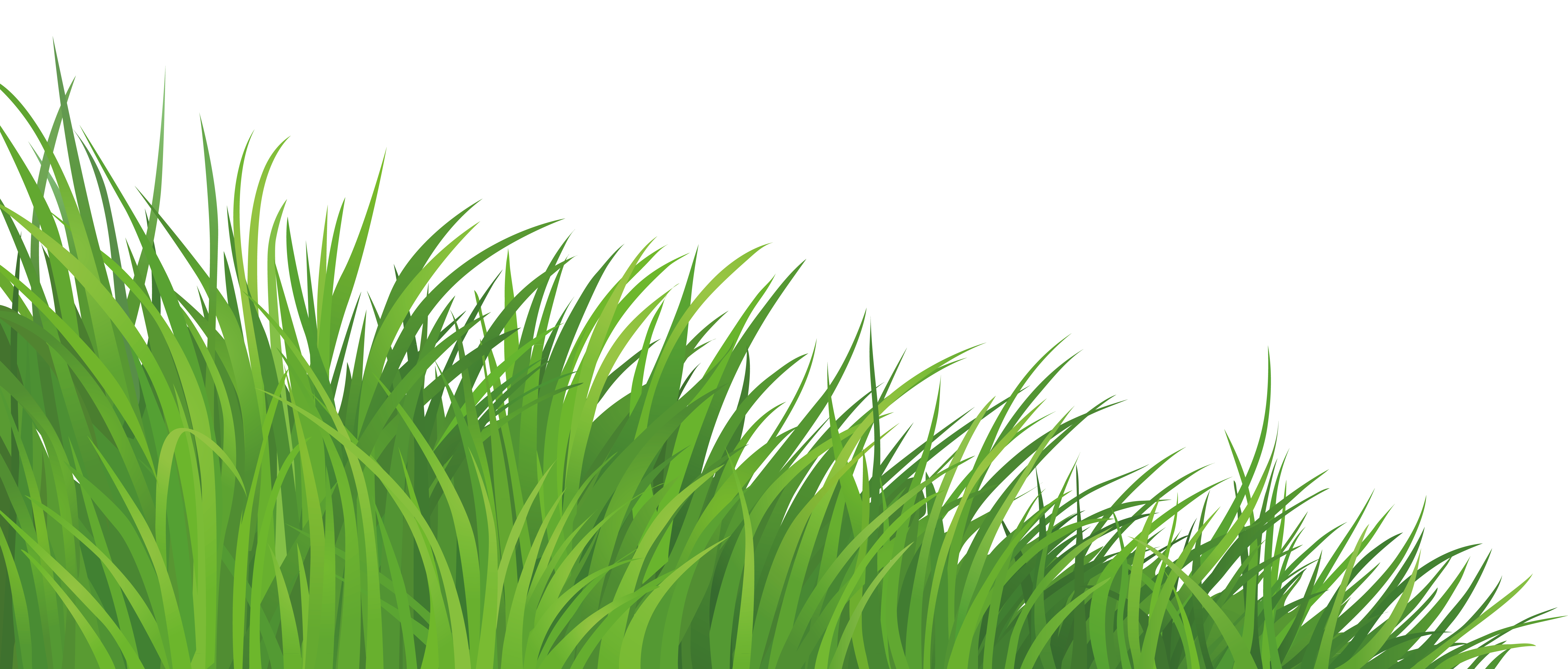 Png photo background. Grass element clipart picture