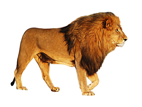 Png photo download. Lion image pngpix