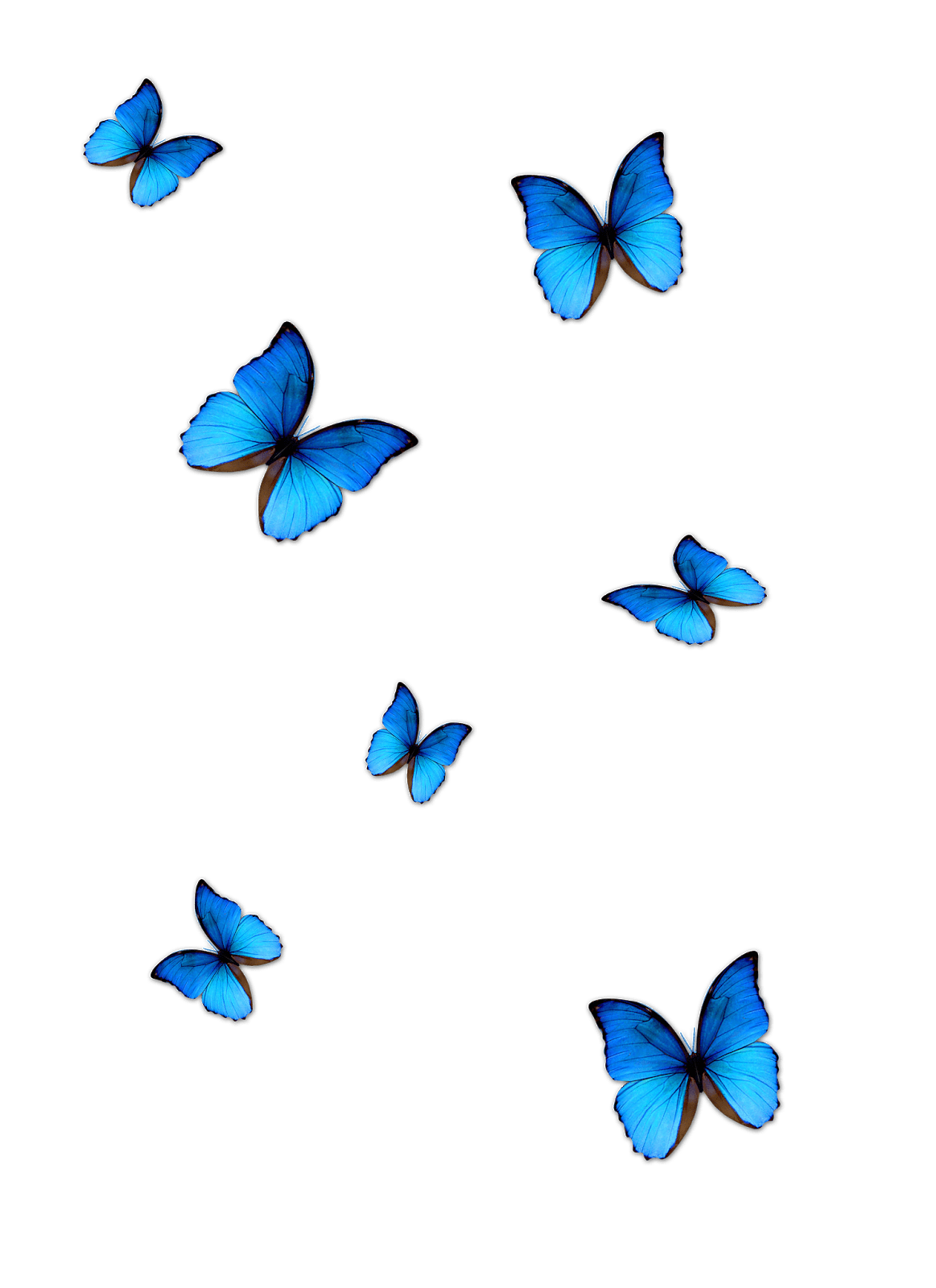Png photo editor download. Lightroom butterfly effect editing