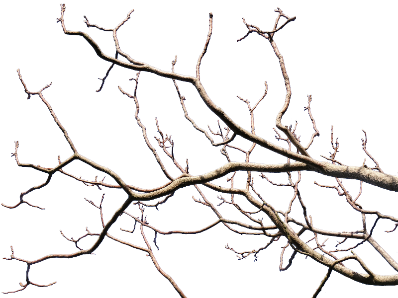 dead tree branch png