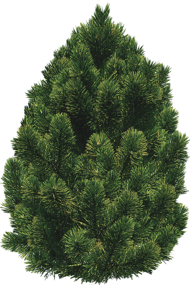 Bush trees free icons. Png pine clip art library library