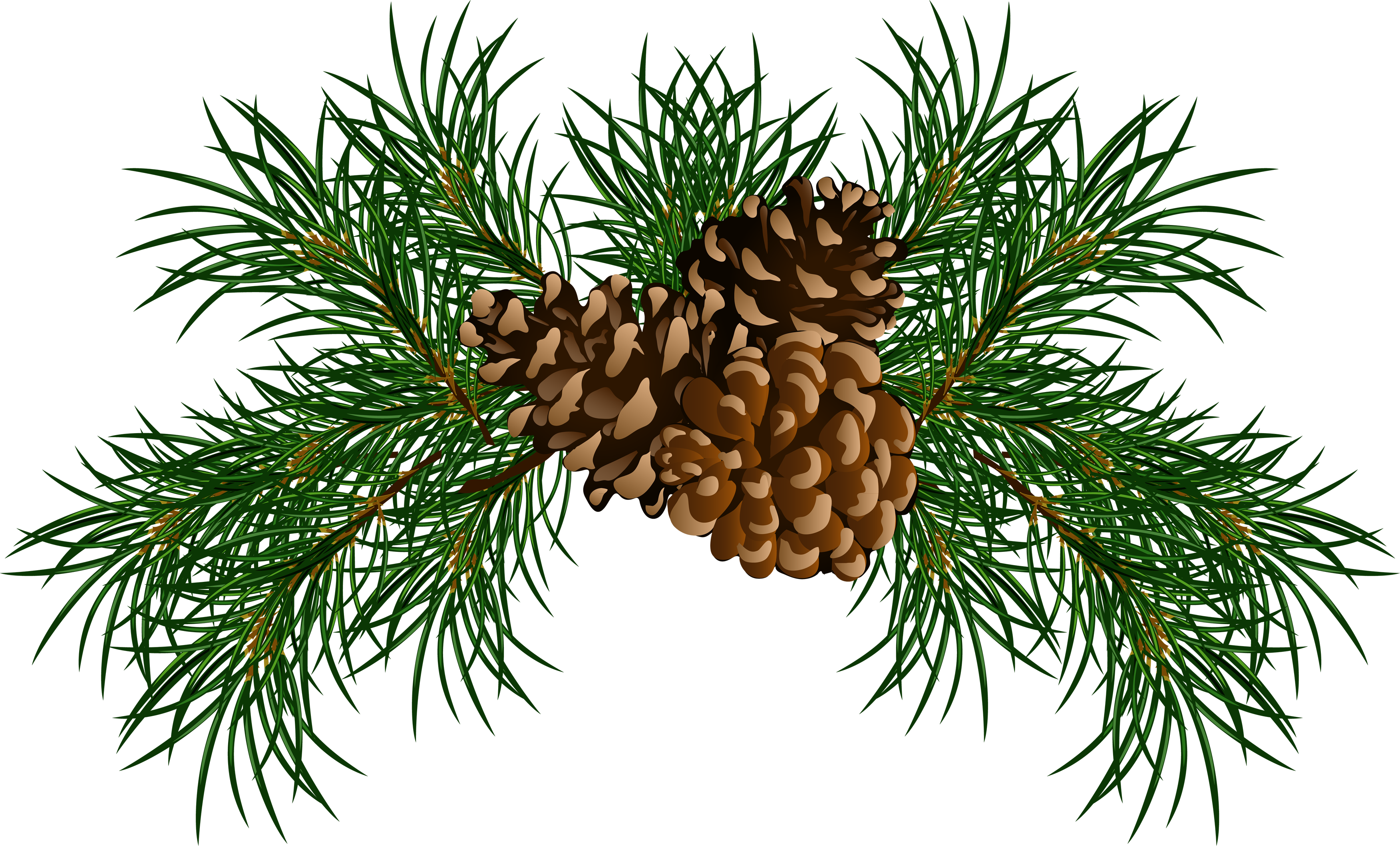 Cone image free download. Png pine banner library library