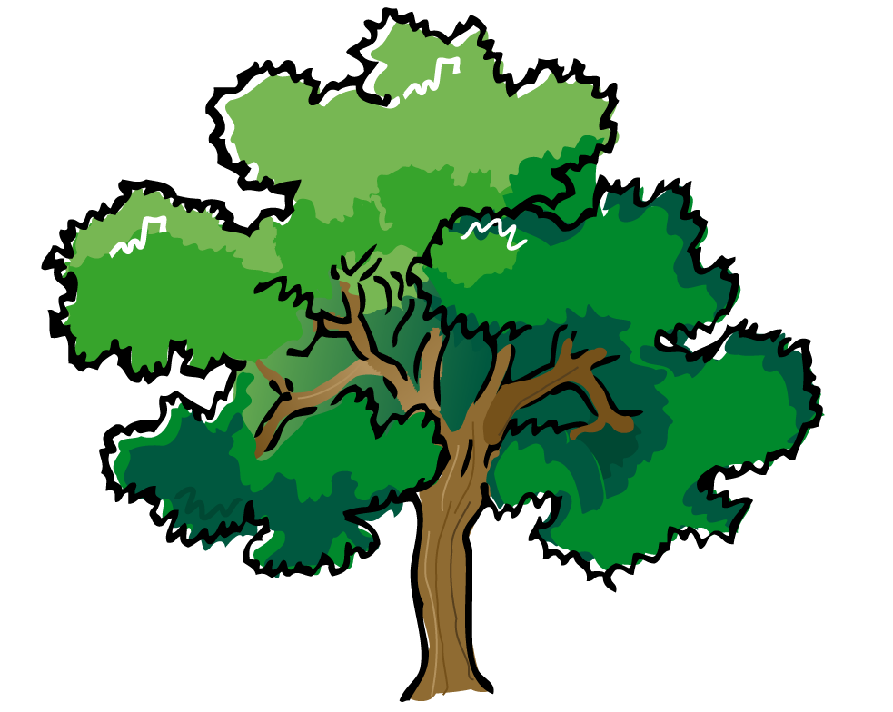 Png pine trees. Tree clipart leaf pencil