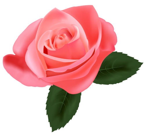 Png pink roses. Rose clipart kwiaty pinterest