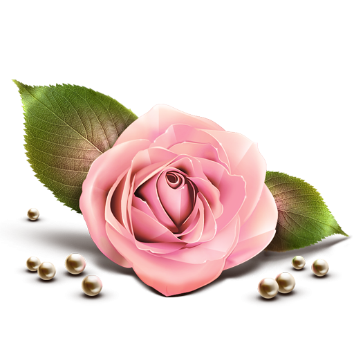 Tea rose png. Pink icon clipart image