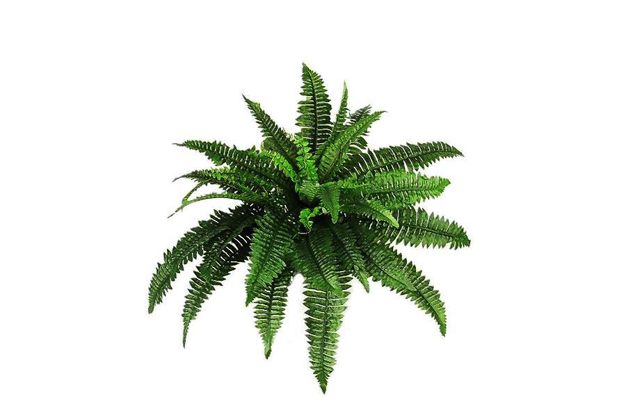 Plant transparent png. Plants bush stickpng download