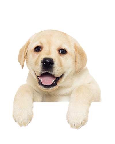 Hd of puppies transparent. Puppy png png library