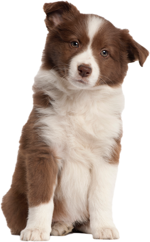 Transparent image mart. Puppy png graphic download