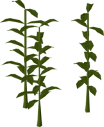 Png seaweed. Spore osrs wiki giant