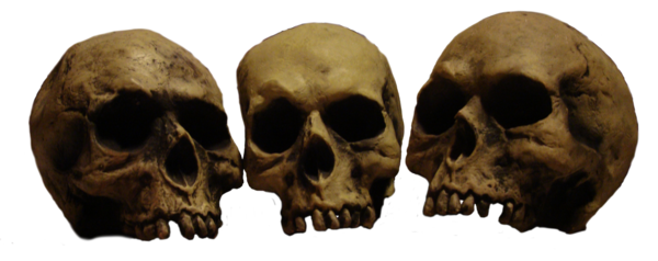 Png skulls. In a row pre