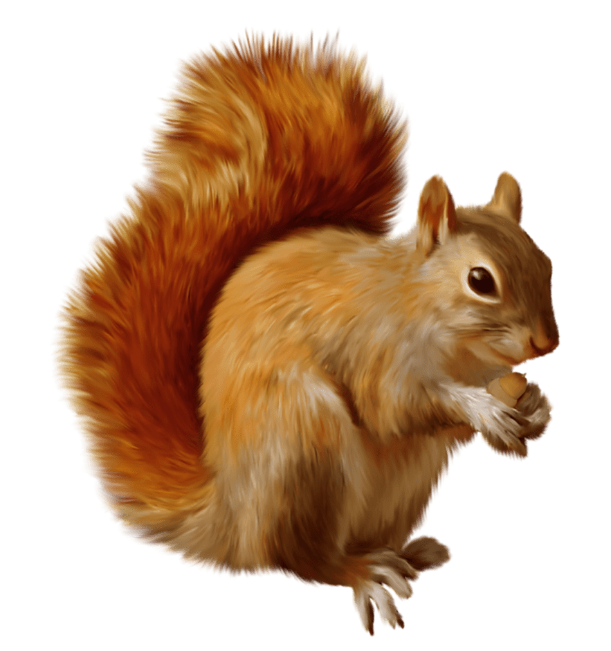 Png squirrel. Eating transparent stickpng animals