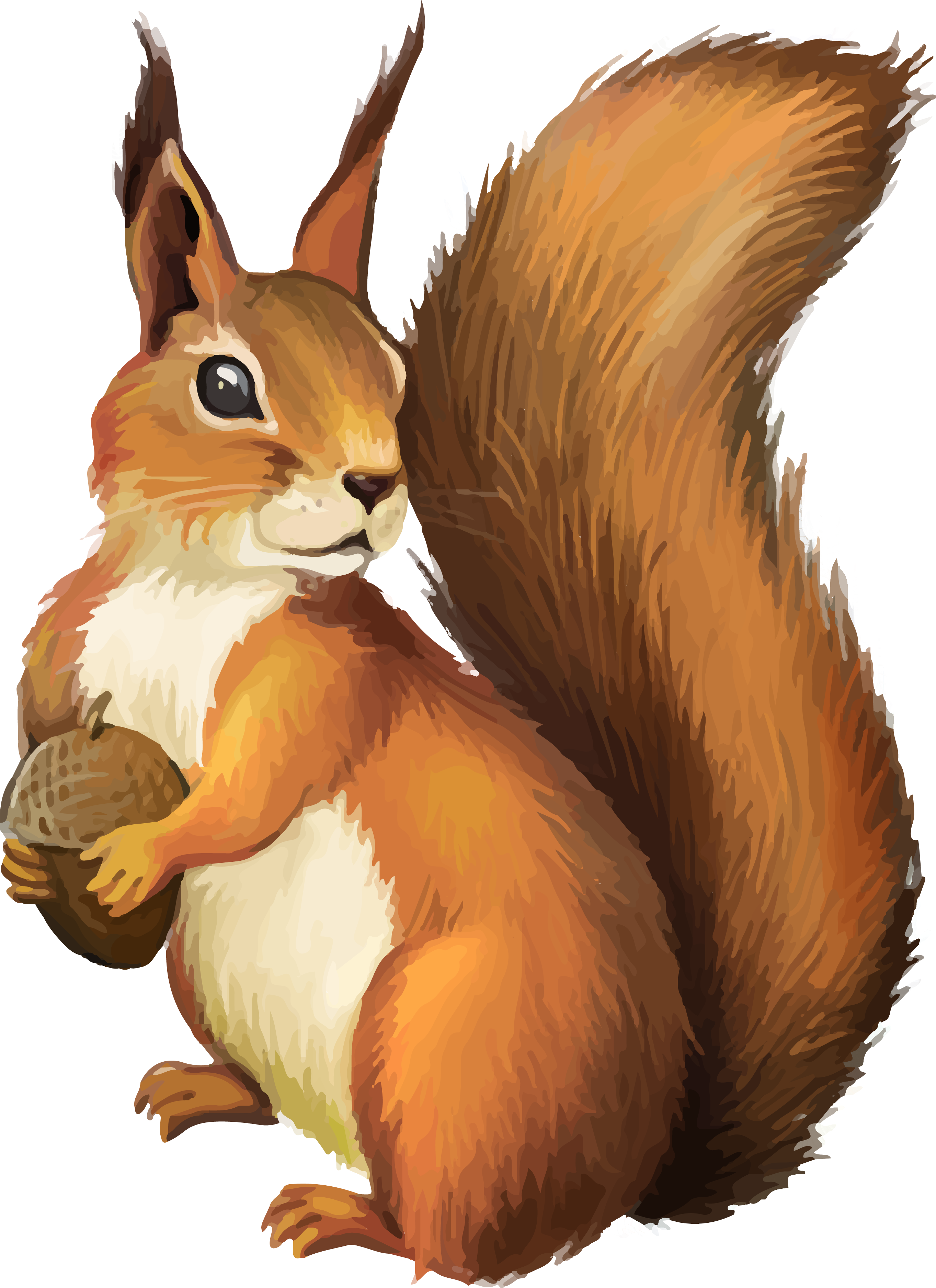 Png squirrel.