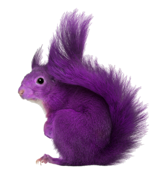 Png squirrel. Transparent free icons and