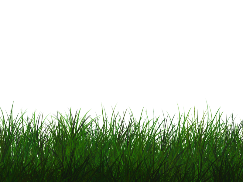 Grass texture png. Free transparent seamless nature