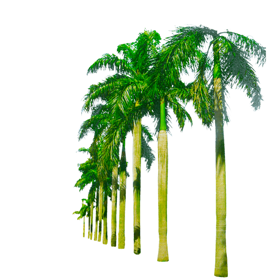 Background png images download. Palm tree image transparent