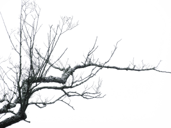 Branches transparent stickpng. Png tree branch banner black and white stock