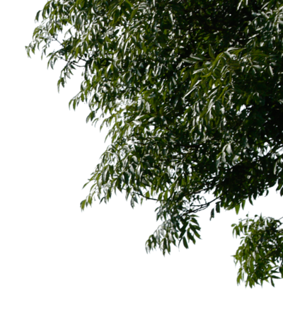 Corner by gd on. Png tree branch freeuse stock