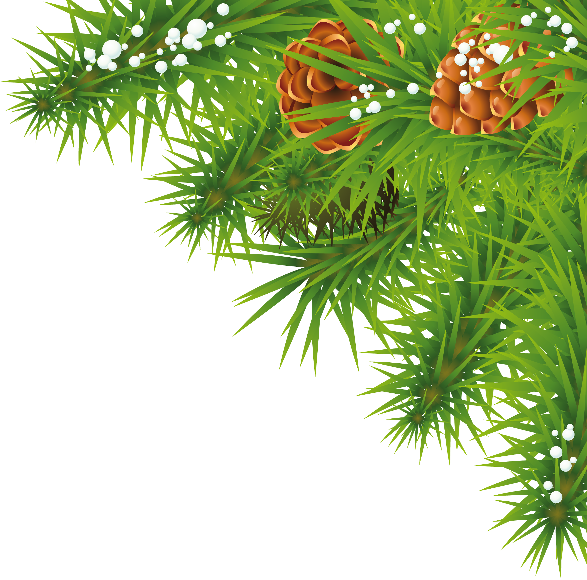 Palm tree christmas tree png. Fir images free download