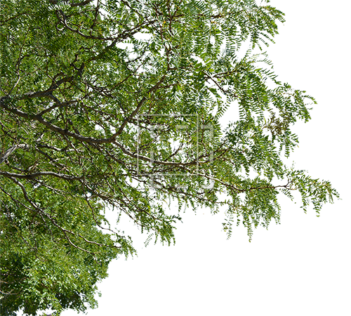 Foreground . Png tree branch jpg royalty free stock