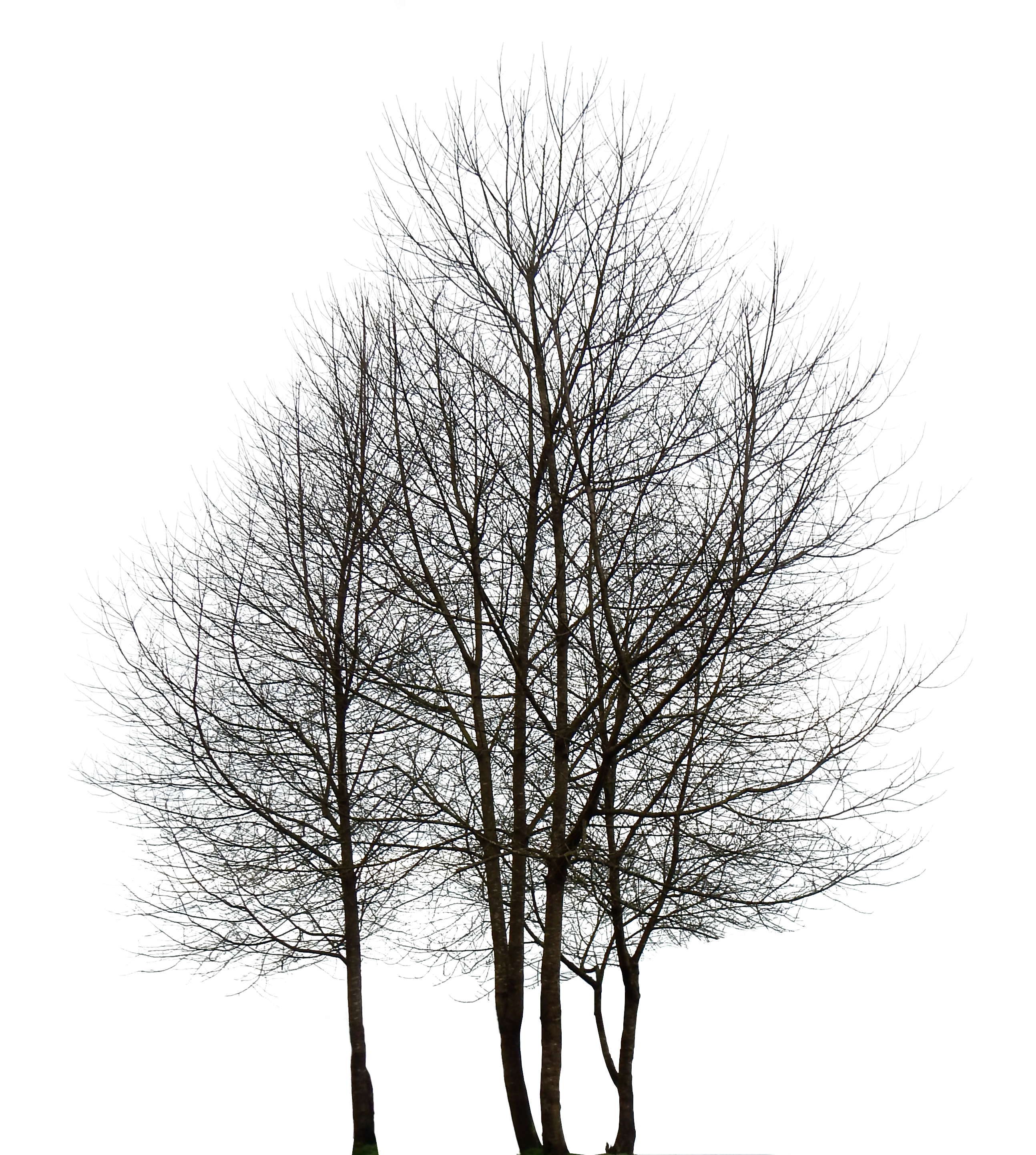 Trees without leaves png. Tree hd transparent images