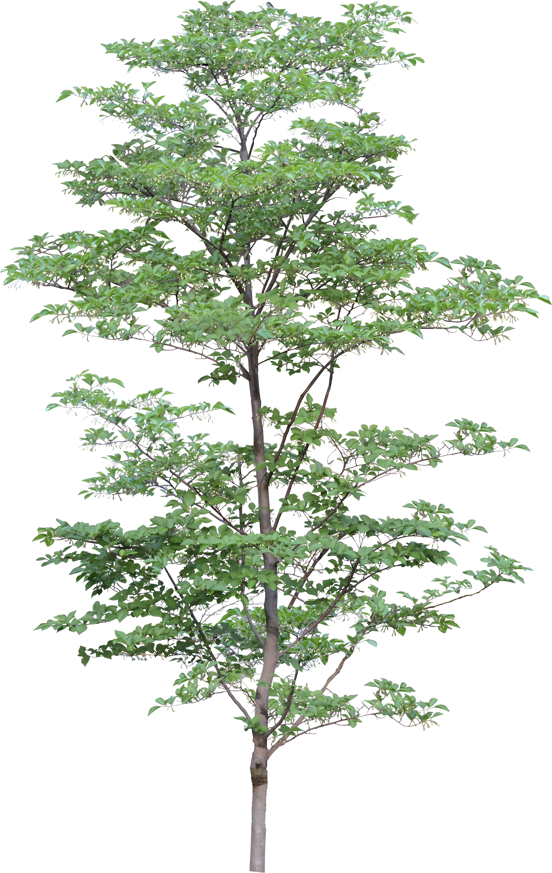 Png trees for photoshop free download. Tree image id photo