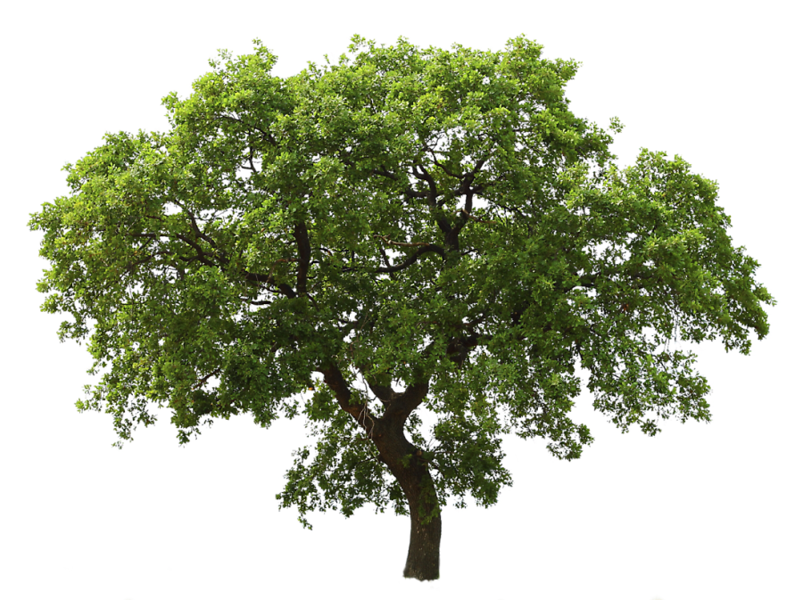 Arboles png photoshop. Tree images for