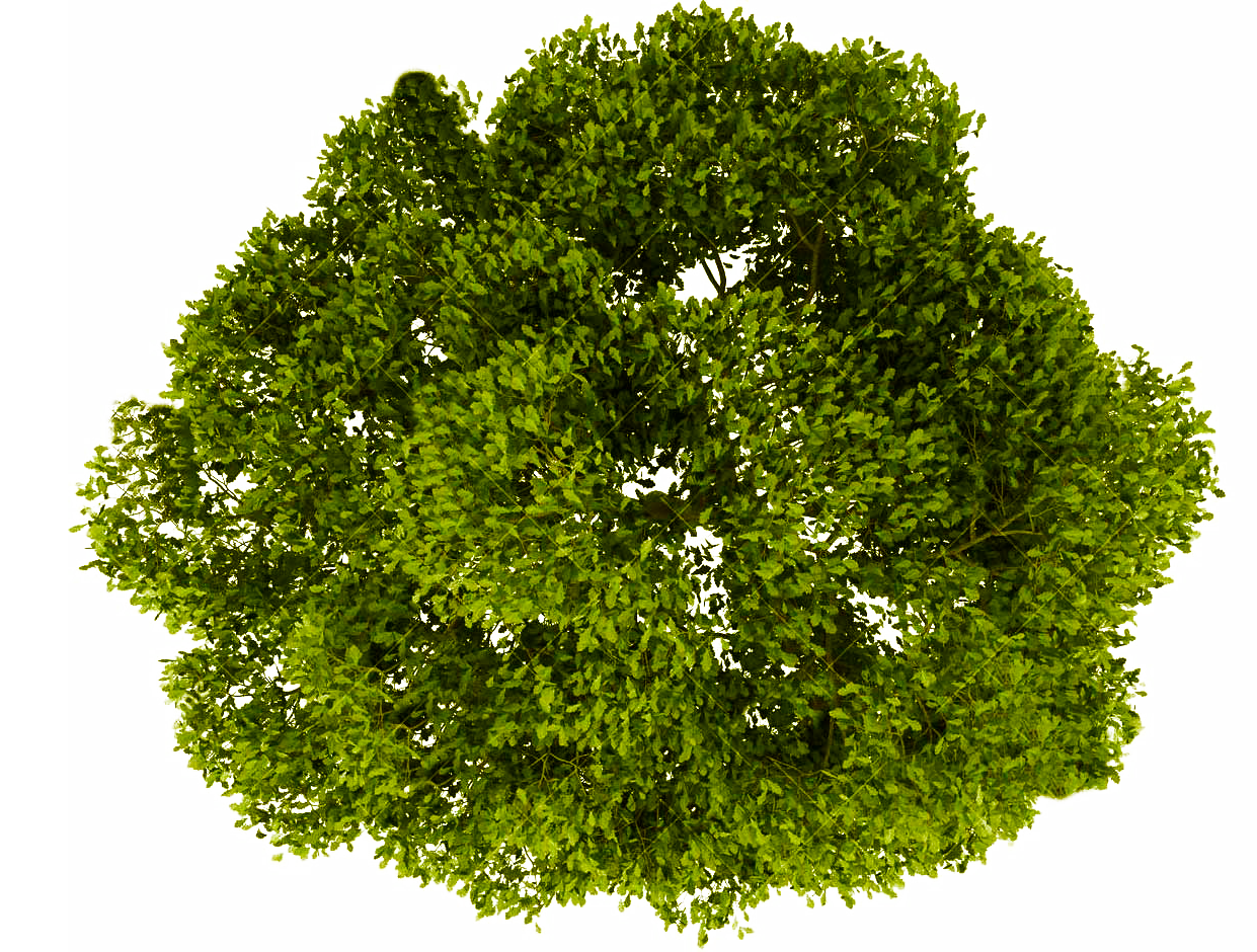 Png trees plan for photoshop. Tree top view transparent
